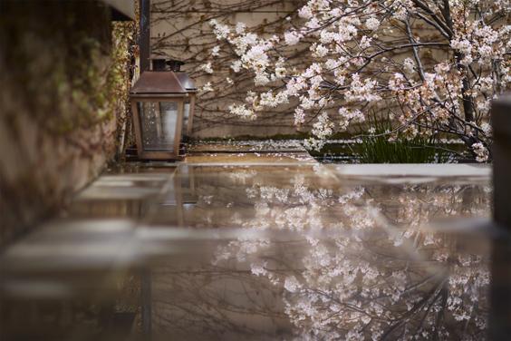 桜メニュー